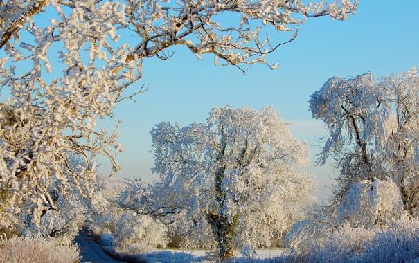 Фото обои зима, дорога, снег, деревья, природа, иний