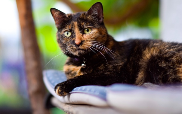 Фото обои котэ, котяра, кошак, лежит