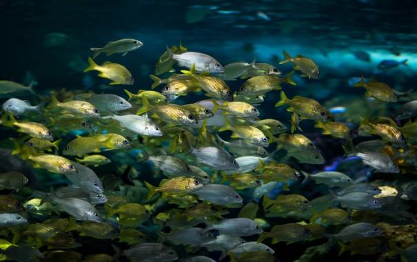 Фото обои вода, рыбы, природа