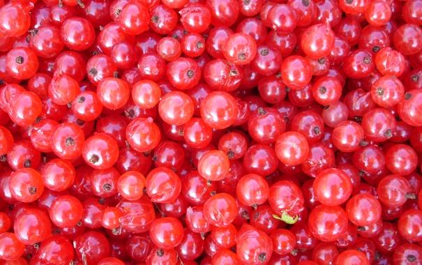 Фото обои еда, красная смородина, ягоды