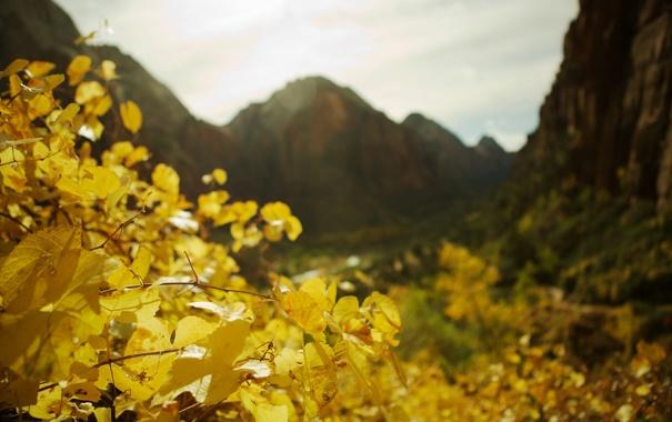 Фото обои осень, листья, макро, природа, фото, пейзажи, растения