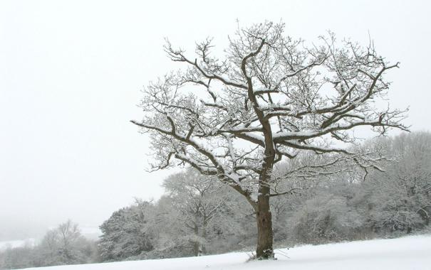 Фото обои зима, снег, деревья, пейзажи, зимние обои