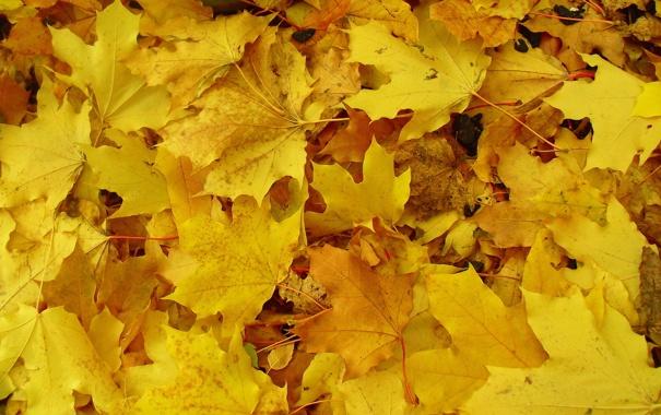 Фото обои осень, листва, жёлтая