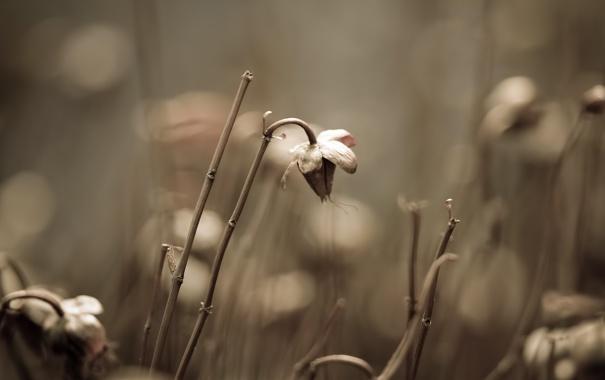 Фото обои макро, природа, фото, фон, растения, сухие, картинка