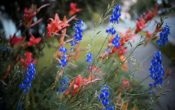 Фото обои цветы, природа, парк, растение