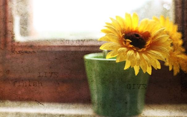 Фото обои цветок, окно, фон, стиль
