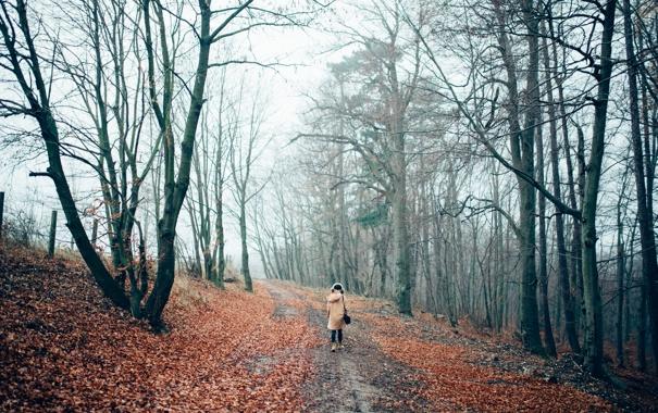 Фото обои осень, лес, девушка, деревья, шапка, человек, куртка