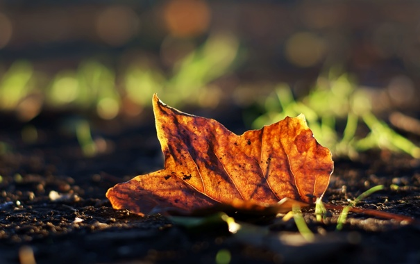 Фото обои осень, трава, макро, лист, фото, фон, земля