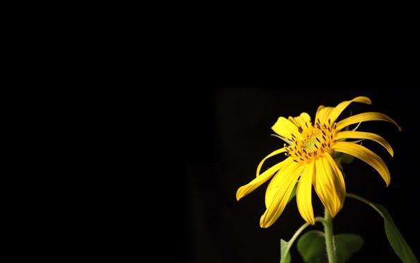 Фото обои макро, цветы, обои, картинки, фотографии