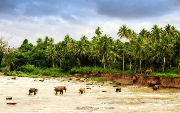 Фото обои песок, животные, деревья, природа, пальмы, фото, обои