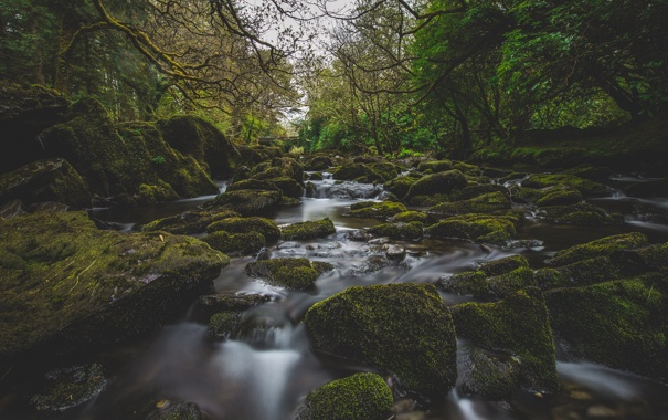 Фото обои лес, деревья, ветки, мост, река, камни, слизь