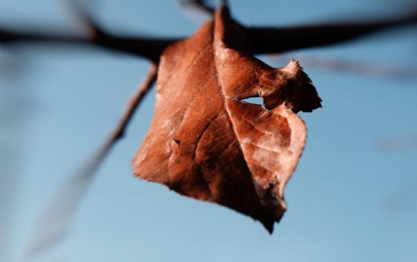 Фото обои макро, лист, увядание
