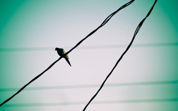 Фото обои птичка, проводе