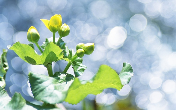 Фото обои зелень, макро, свет, природа, зеленый, блики, растение