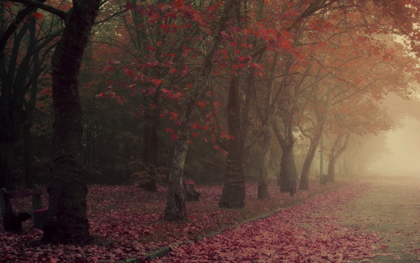 Фото обои осень, город, туман, парк