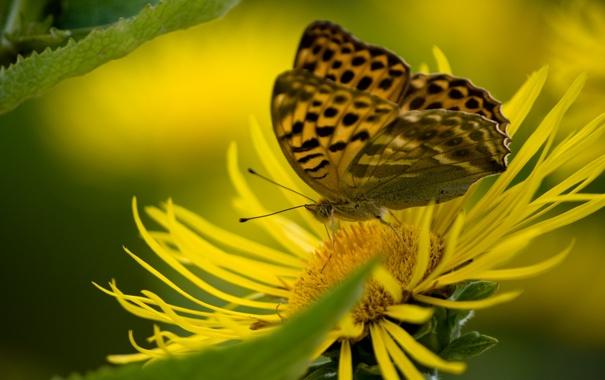Фото обои цветок, макро, бабочка, метелик
