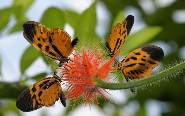 Фото обои цветок, бабочки, листва