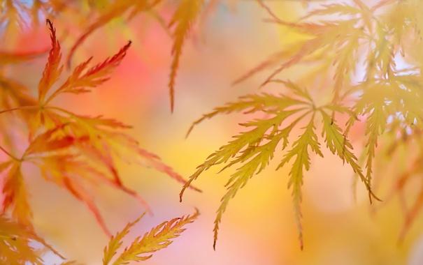 Фото обои листья, осень, природа, цвет