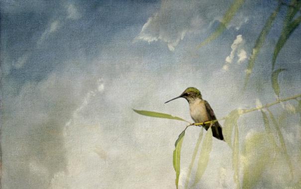 Фото обои небо, листья, птица, ветка, текстура, клюв, холст