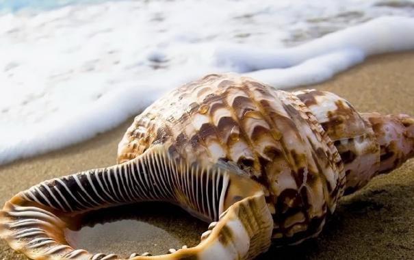 Фото обои песок, капли, океан, берег, раковина, ракушка, пепна