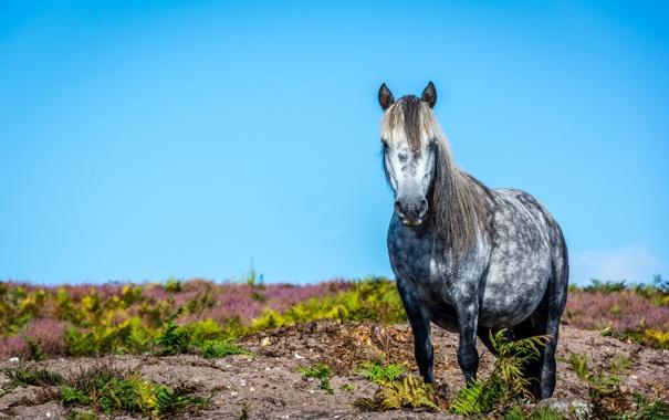 Фото обои конь, лошадь, грива
