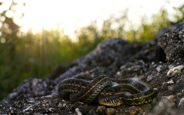 Фото обои лучи, природа, камни, змея