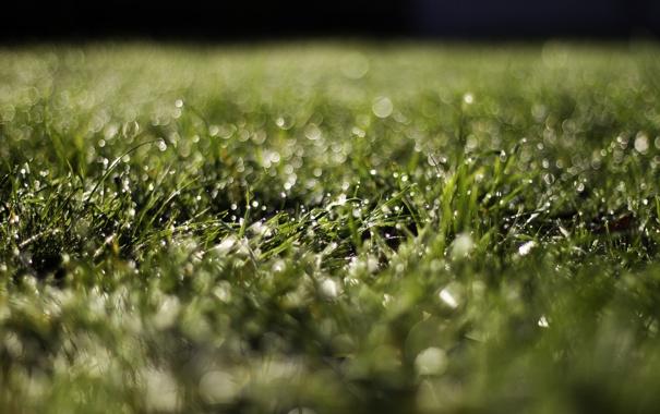 Фото обои трава, капли, макро, роса, блики, боке