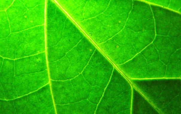 Фото обои макро, лист, растение, зелёный, прожилки