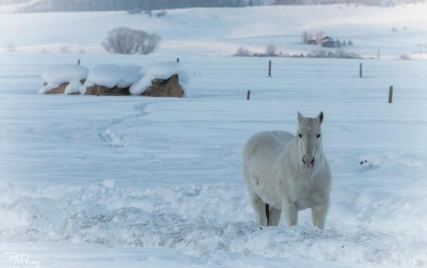 Фото обои зима, природа, конь