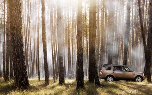 Фото обои Деревья, Land Rover, Auto