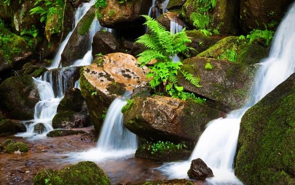Фото обои лес, река, ручей, камни, скалы