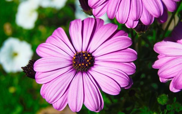Фото обои природа, Цветы, растения