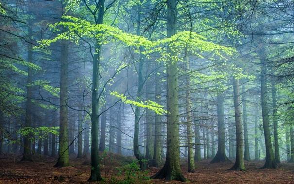 Фото обои лес, деревья, туман, Великобритания, Darley Moor