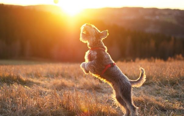 Фото обои солнце, собака, мячь