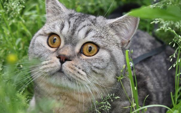 Фото обои зелень, глаза, кот