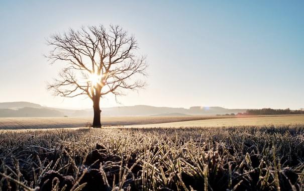 Фото обои поле, свет, дерево, утро