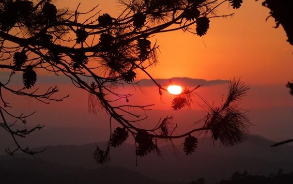 Фото обои деревья, ветки, природа, небо. закат
