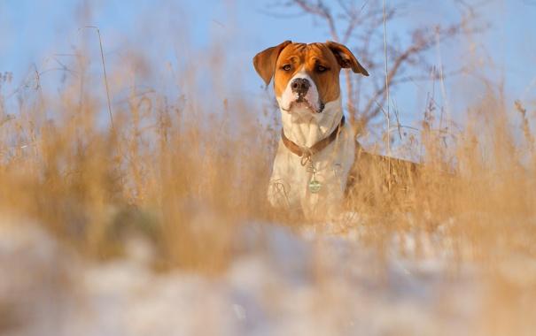 Фото обои зима, взгляд, собака