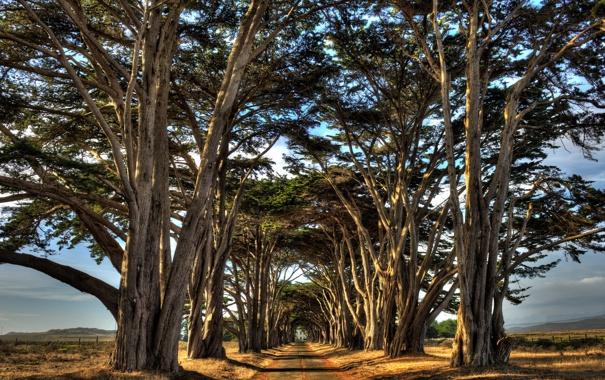 Фото обои пейзаж, деревья, дорога