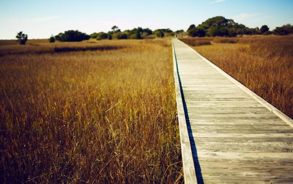 Фото обои дорога, поле, небо