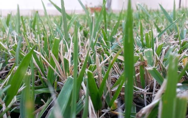 Фото обои лето, трава, макро, фон, зеленая
