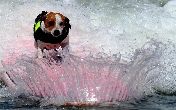 Фото обои вода, брызги, собака, доска