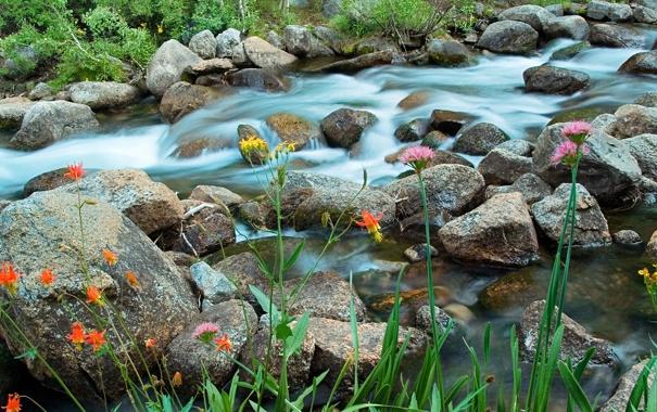 Фото обои трава, цветы, река, ручей, камни, поток