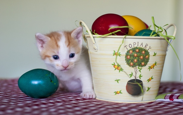 Фото обои яйца, пасха, котёнок, крашенки, ведёрко