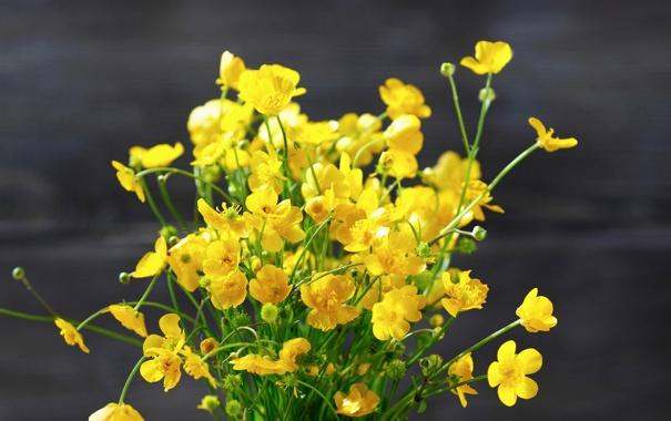 Фото обои Лютик, Желтый, Цветы, фото