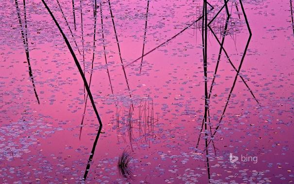 Фото обои листья, вода, отражение, краски, растение, США, Миннесота