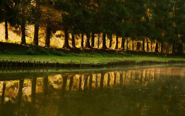 Фото обои трава, вода, лучи, свет, деревья, природа, парк
