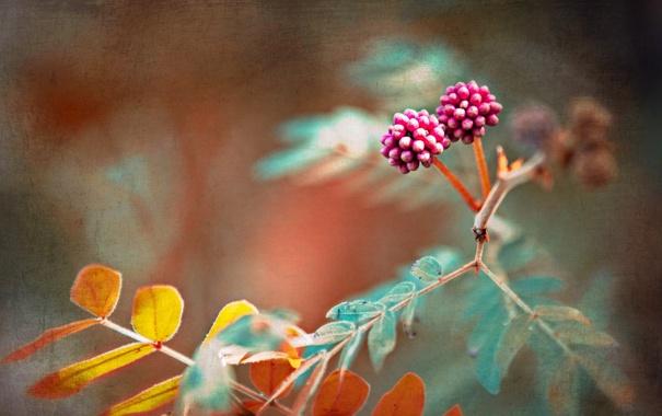 Фото обои осень, лес, природа, стиль