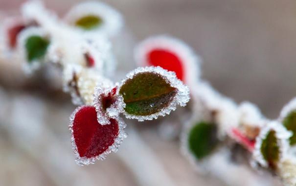 Фото обои иней, осень, листья, ветка, кристаллы