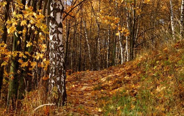 Фото обои осень, листья, деревья